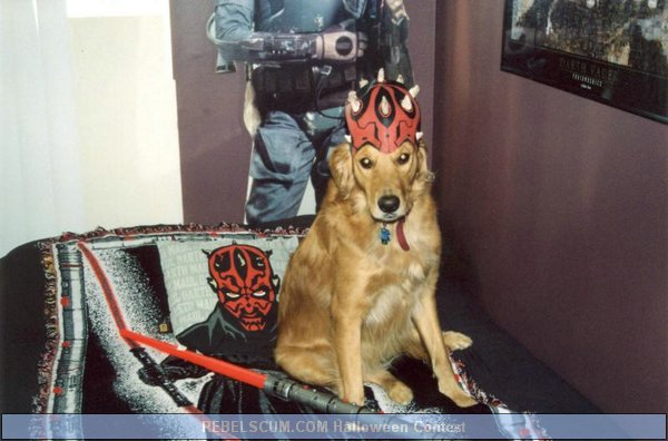 Chewy as Darth Maul